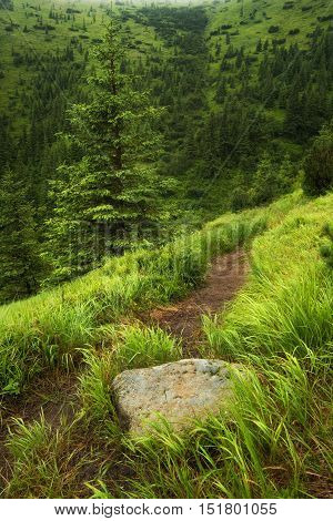 Walkway on mountain field. Beautiful natural landscape