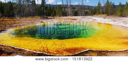 Colorful Morning Glory Pool - famous hot spring in the Yellowstone National Park, Wyoming, USA