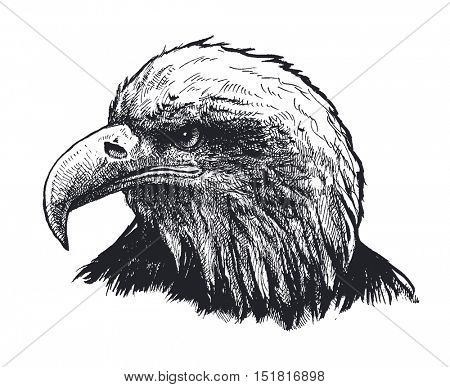 Eagle Hand drawn Vector illustration.