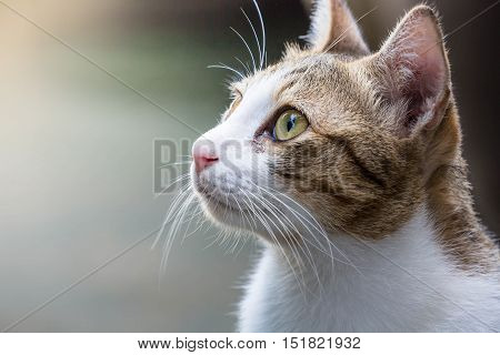 cat looking over the top and portrait close up