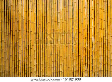 yellow bamboo fence background and bamboo texture