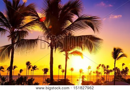 Coconut palm trees against colorful sunset, Punta, Cana, Dominican, Republic