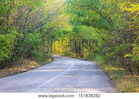 Asphalt road through a trees on autumn