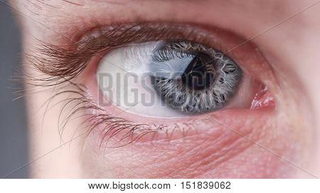 Macro image of human beautiful grey eye with a reflection of photographer
