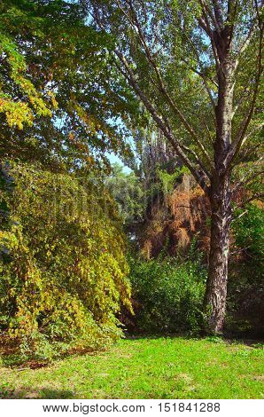Changing colors of the forest. Autumn landscape. The place is an arboretum in Tiszalok, Hungary.
