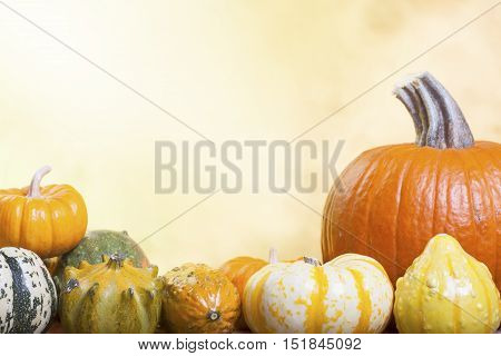 Assorted Pumpkins Gourds and Squash on a Blurred Autumn Background