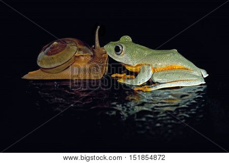Tree frog, Java frogs and snails kissing
