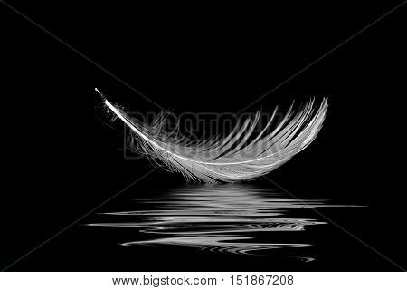 white seagull feather floating on black rippled water