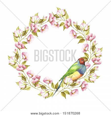 frame with a bird and a sprig.Gouldian Finch. Watercolor illustration