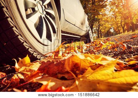Car on asphalt road on autumn day at park