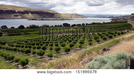 An abundance of food is grown in the Columbia River Basin