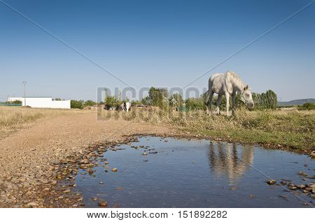 Two horses grazing in a rural landscape in Ciudad Real Province Spain