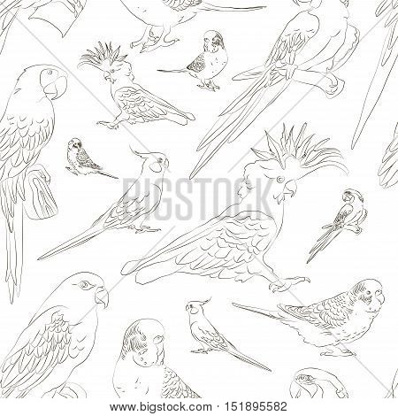 Parrots set pattern. Tropical parrots feather zoo birds, tropical fauna macaw flying ara. Various exotic birds set with parrots vector illustration.