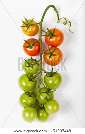ripe red yelow and green tomato bunch