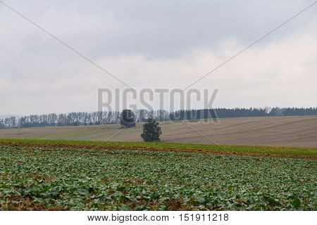 Autumn weather on a gricultural fields. Cloudy. Autumn.