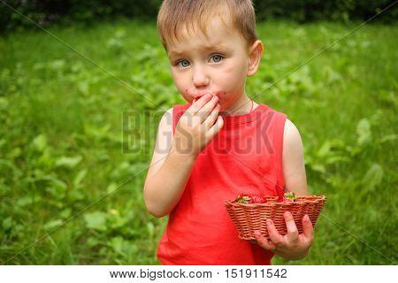 Little boy stands and eats strawberries in summer green garden