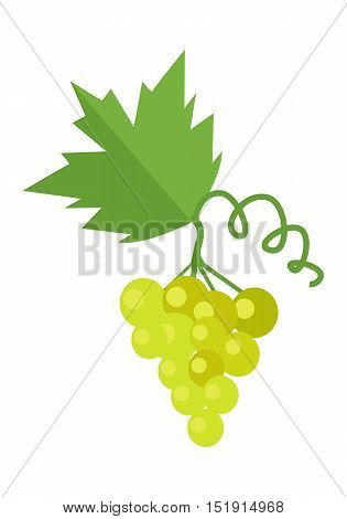 Bunch of white wine grape with green leaves. Fresh fruit. Vineyard grape icon. White grapes icon. Wine grape icon. Isolated object in flat design on white background. Vector illustration.