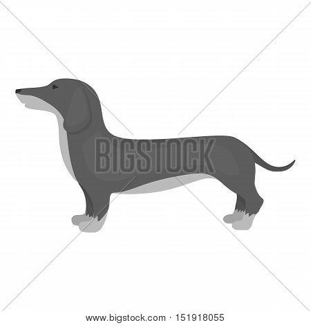 Dachshund vector illustration icon in monochrome design