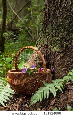 Wicker Basket With Flowers Bell Near Wood In Forest Summer. Wicker Basket On Forest Background. Wicker Basket And Flowers Bell In Forest.