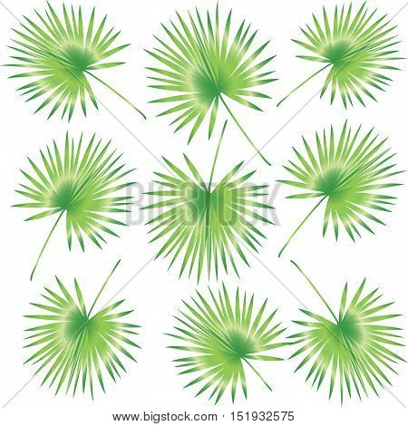 Palm leaf pattern. Abstract Palm leaves seamless pattern for Jewish Holiday Rosh Hashana and Sukkot. Tropical palm leaf. Exotic branch leaves. Vector Illustration. Exotic background.