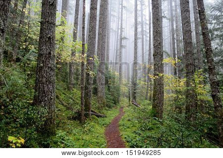 A forest trail in the Pacific Northwest