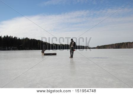 beautiful young Alsatian dog on the frozen lake