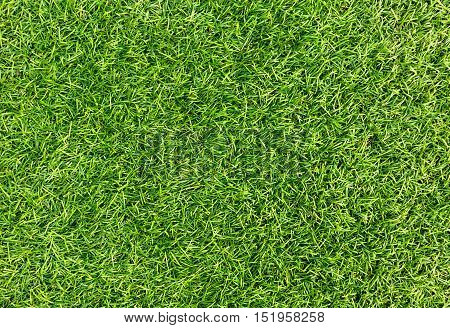 Green grass seamless texture. Top view grass