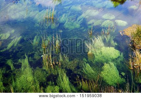 The bottom of the river, overgrown with green algae