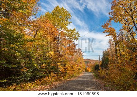 Trees In Autumn Colors