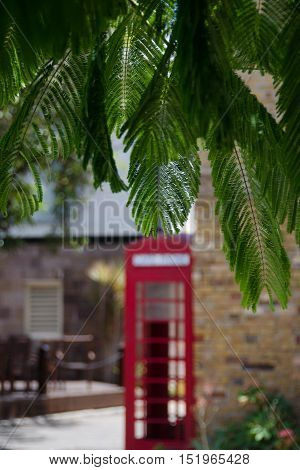 Red Phone Box In Shadows Under Spanish Cedar