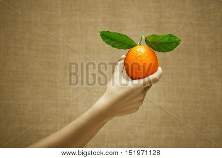 Orange fruit in female hand on burlap background. Cultivation selection stands out from the crowd concept. Sepia and color series.