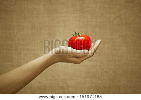 Red juicy tomato fruit in female hand on burlap background. Cultivation selection stands out from the crowd concept. Sepia and color series.