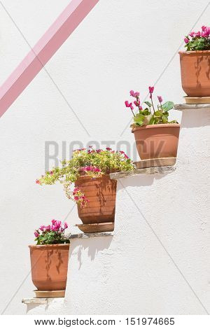 Four pots with flowers against a white wall and a pink designed line on it.