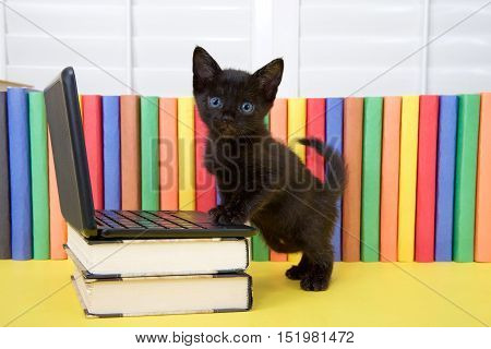 Small black kitten standing at miniature laptop computer on books with colorful books in background. Paws on computer standing looking at viewer