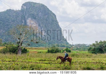 VINALES, CUBA - MARCH 19, 2016: Cuban cowbay in the Vinales Valley in Cuba