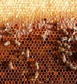honey cells and bees poster