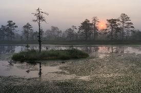 Bog landscape in the morning with rising sun.