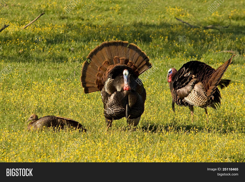 turkeys offensive agai germany - 900×484
