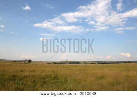 Field With Far Away Animals