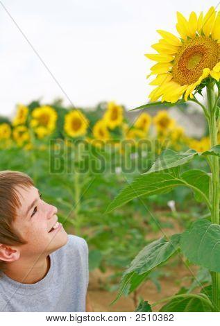 Boy Observing A Sunflower