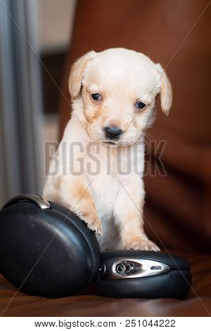 Cute Little Puppy With Headphones On Brown Leather Chair