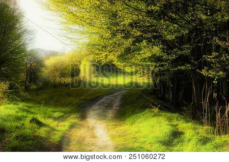Fantasy Summer Landscape With Footpath And Woodland, Sunny Day Dreaming. Rural Dreamlike Dirt Road N