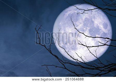 Full Blue Moon Back Silhouette Branch Dry Tree