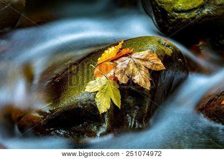 Autumn leafs on wet stone in mountain brook