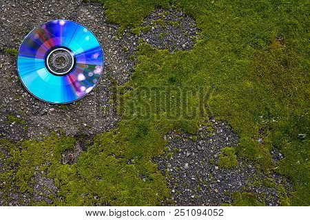 Cd Sfalte Wet And Green, Bright Moss. Green Moss, Asphalt, And A Cd With Highlights.