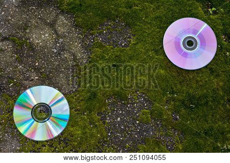 Cds With Scratches On The Asphalt And Moss.  Cd-rom And A Beautiful Moss - With Space For Text, With