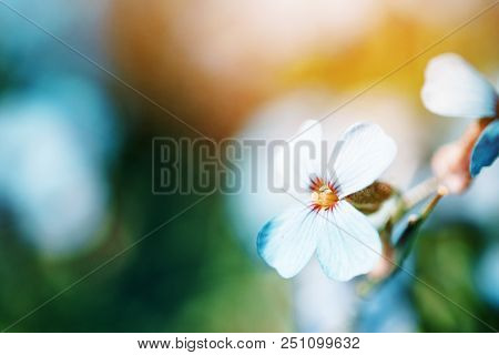 Spring lila Phlox flowers on blurred macro background. Spring or summer border template with copy space. Romantic greeting card. Blooming Polemoniaceae flowers on sunny day. flowering springtime. poster
