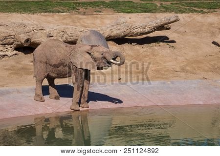 water for elephants free