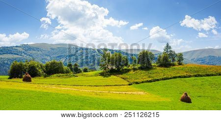 Panorama Of Grassy Agricultural Field With Haystacks And Orchard. Lovely Rural Summer Landscape In M