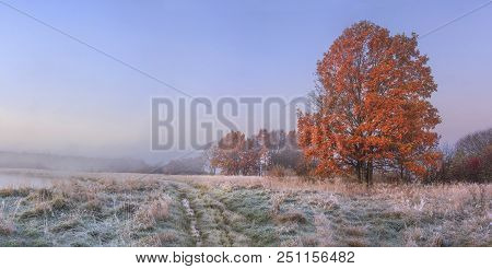 Autumn Nature Landscape With Clear Sky And Colored Tree. Cold Meadow With Hoarfrost On Grass In Nove